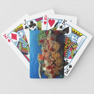 Filón escénico de los corales duros, corales suave cartas de juego