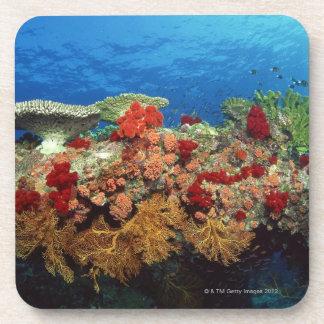 Filón escénico de los corales duros, corales suave posavaso