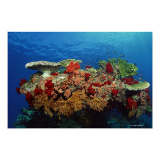 Filón escénico de los corales duros, corales suave póster