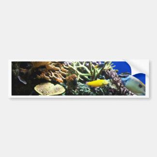 Filón tropical 3 etiqueta de parachoque