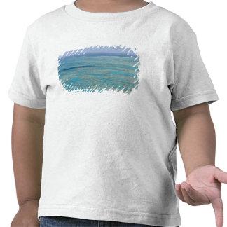 Filón tropical, la gran barrera de coral, camisetas