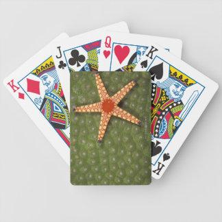 Filones de la limpieza de la estrella de mar comie barajas de cartas