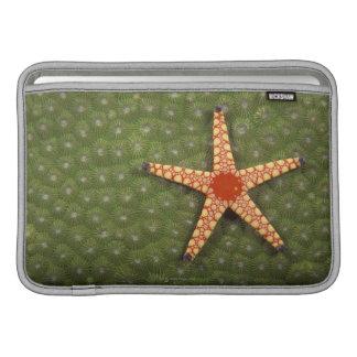 Filones de la limpieza de la estrella de mar comie funda macbook air
