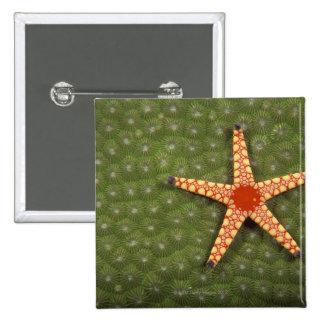 Filones de la limpieza de la estrella de mar comie pin cuadrado