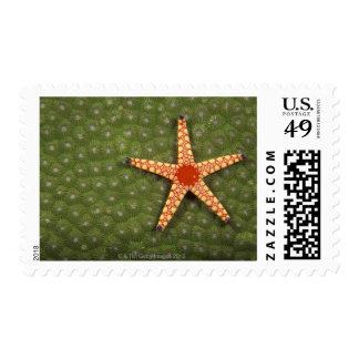 Filones de la limpieza de la estrella de mar sello