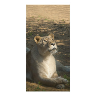 Fimale Lion Photo Card