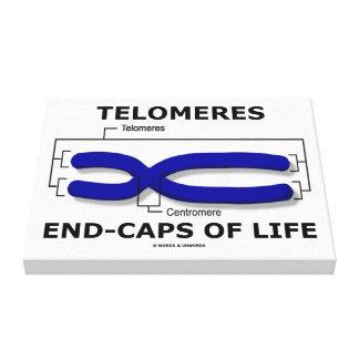 Fin-Casquillos de Telomeres de la vida (humor de Impresión En Lienzo Estirada
