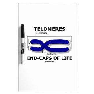 Fin-Casquillos de Telomeres de la vida (humor de Pizarras Blancas