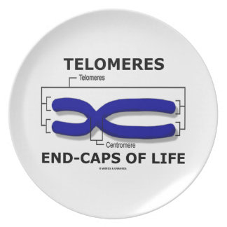 Fin-Casquillos de Telomeres de la vida humor de Plato Para Fiesta
