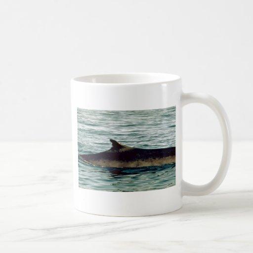 Fin whale classic white coffee mug