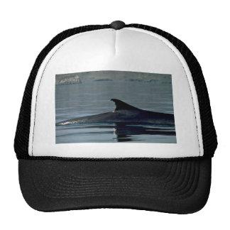 Fin whale, dorsal fin mesh hat