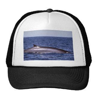 Fin whale trucker hats