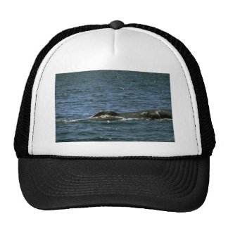 Fin whale hats