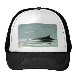Fin whale trucker hat