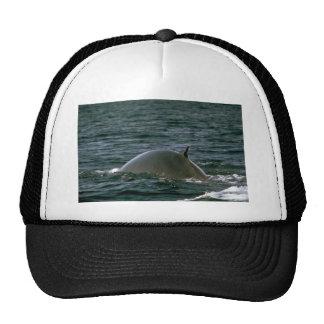Fin whale mesh hat