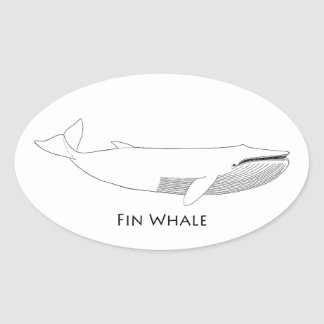 Fin Whale Illustration Oval Sticker