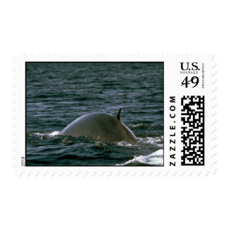 Fin whale stamps
