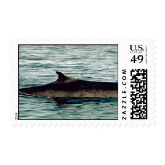 Fin whale postage stamps
