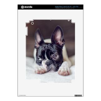 Fina la Boston Terrier iPad 3 Skin