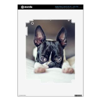Fina la Boston Terrier Pegatina Skin Para iPad 3