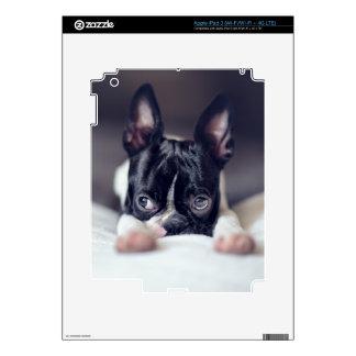 Fina la Boston Terrier Pegatinas Skins Para iPad 3
