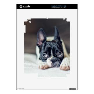 Fina la Boston Terrier Skin Para El iPad 2