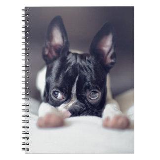 Fina la Boston Terrier Spiral Notebook
