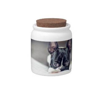 Fina the Boston Terrier Candy Dishes