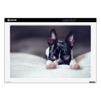 Fina the Boston Terrier Decals For Laptops