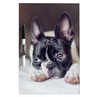 Fina the Boston Terrier Dry-Erase Whiteboard