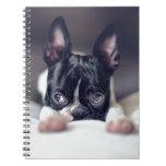 Fina the Boston Terrier Note Books