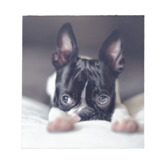 Fina the Boston Terrier Note Pad
