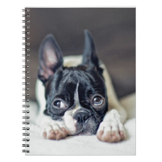 Fina the Boston Terrier Notebook