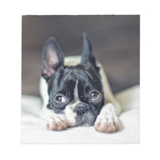 Fina the Boston Terrier Notepad