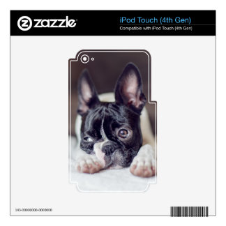 Fina the Boston Terrier iPod Touch 4G Decals
