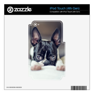 Fina the Boston Terrier Skin For iPod Touch 4G