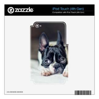 Fina the Boston Terrier Decal For iPod Touch 4G