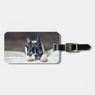Fina the Boston Terrier Travel Bag Tag