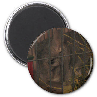 Finally Home Chinchillas: Lilith 2 Inch Round Magnet