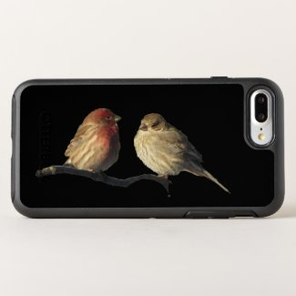 Finch Birds Animal