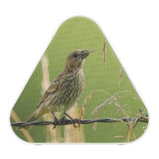 Finch eating seeds of a wild grass bluetooth speaker