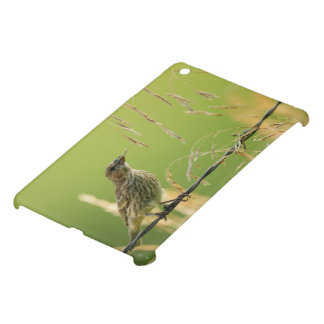 Finch eating seeds of a wild grass case for the iPad mini