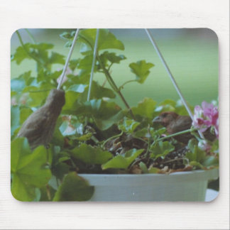 Finch family - mousepad