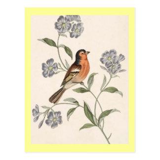 Finch from Junglewalk Postcards