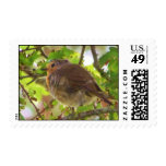 finch in tree postage
