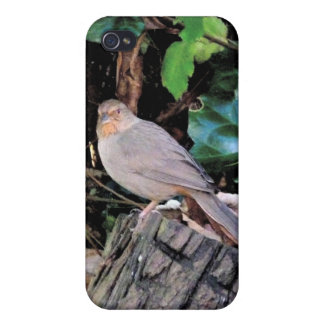 Finch iPhone 4/4S Cover