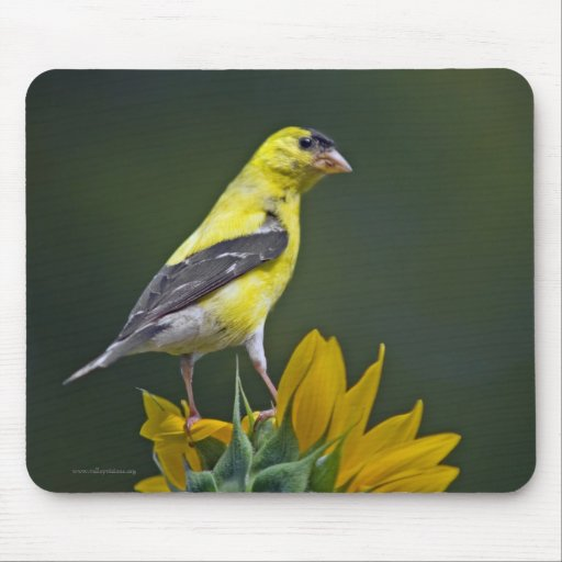 Finch Mouse Pad