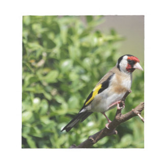 FInch Notepad