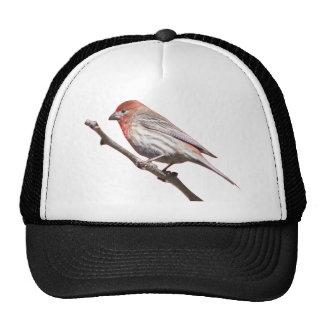 Finch on a branch trucker hat