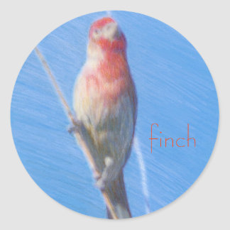 Finch sticker